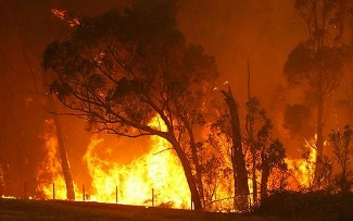 Fire: Recovery & Resilience Workshop